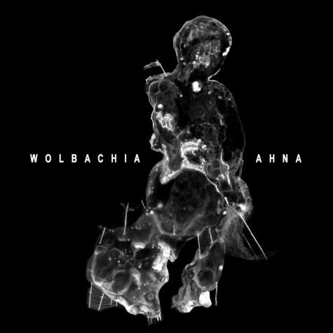 """Wolbachia / Ahna split 7"""""""